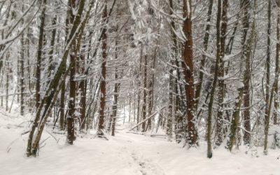 Faut-il réaliser une «coupure hivernale» ?