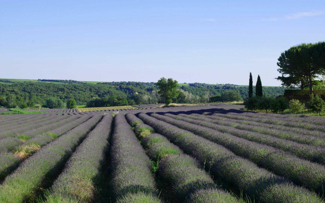 4 routes à emprunter autour de l'Enclave des Papes pour admirer les champs de lavande